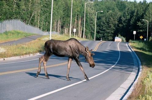 liste og fakta over ville dyr i norge