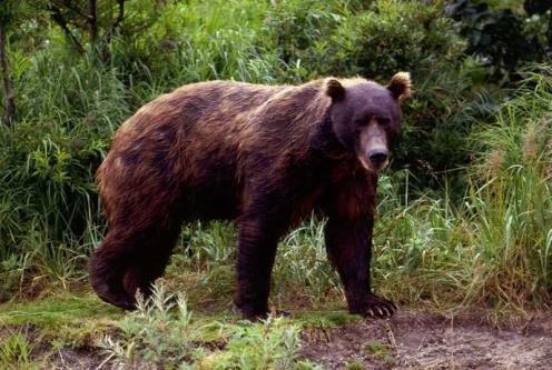 Farlige dyr i Norge