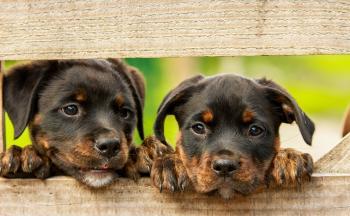 Populære hunderaser